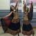 Bollywood costume
