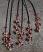 tribal tessels